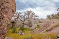 Albero incantato della roccia Fotografia Stock