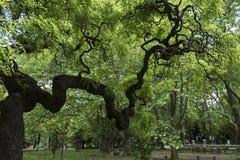Albero incantato nel parco Fotografie Stock Libere da Diritti