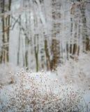 Albero innevato di inverno Fotografia Stock