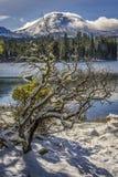 Albero innevato di Manzanita, picco del lago Manzanita, Lassen, parco nazionale vulcanico di Lassen Fotografie Stock