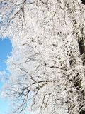 Albero in inverno Fotografia Stock Libera da Diritti