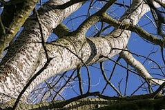 Albero in inverno Fotografie Stock Libere da Diritti