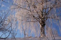 Albero in inverno Immagine Stock