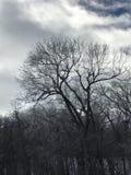 Albero in inverno Immagine Stock Libera da Diritti