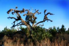 albero isolato Immagini Stock Libere da Diritti