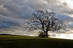 albero isolato Fotografia Stock Libera da Diritti