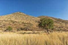 Albero isolato con la montagna e l'erba in tonalità di giallo nafta immagine stock