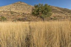 Albero isolato con la montagna e l'erba in tonalità di giallo nafta immagine stock libera da diritti