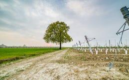 Albero isolato nella campagna Fotografia Stock Libera da Diritti