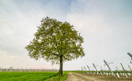 Albero isolato nella campagna Fotografie Stock