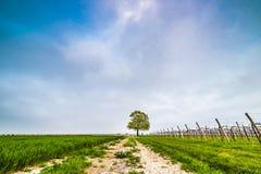 Albero isolato nella campagna Fotografia Stock
