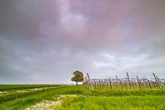 Albero isolato nella campagna Immagine Stock