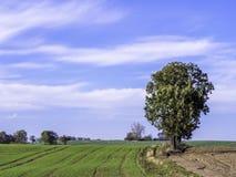 Albero isolato sul campo Fotografie Stock