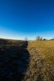 Albero isolato in una mattina fredda di dicembre Fotografie Stock