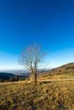 Albero isolato in una mattina fredda di dicembre Fotografia Stock