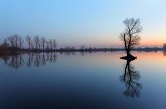 Albero in lago con il cielo di colore Immagine Stock