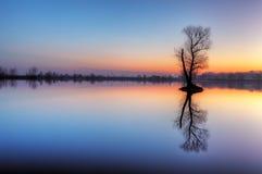 Albero in lago con il cielo di colore Immagini Stock Libere da Diritti