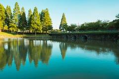 Albero, lago e riflessione sull'acqua Fotografia Stock