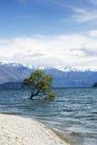 Albero in lago Wanaka Fotografie Stock