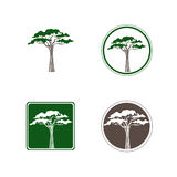 Albero Logo Design Set dell'acacia Fotografie Stock Libere da Diritti