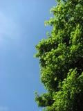 Albero luminoso Fotografie Stock