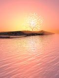 Albero luminoso su un'isola Immagine Stock