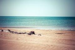 Albero marcio sulla spiaggia fotografie stock libere da diritti