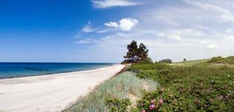 Albero in mare. Fotografia Stock