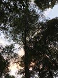 Albero in mezzo alla foresta, cielo blu Immagine Stock
