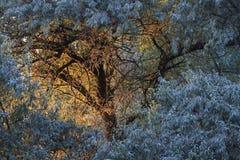 Albero miracoloso al tramonto fotografia stock libera da diritti