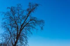 Albero in molla in anticipo contro un cielo blu immagine stock