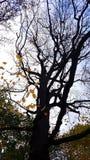 Albero Molti rami Le foglie sui rami Immagine Stock