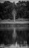 Albero monocromatico sulla Banca di un lago Fotografia Stock