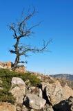 Albero in montagne Fotografie Stock