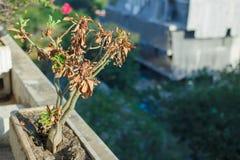 Albero morto Fotografia Stock Libera da Diritti