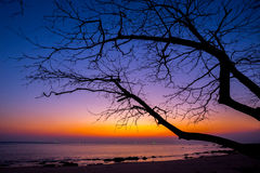 Albero morto alla spiaggia di tramonto Immagine Stock