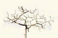 Albero morto asciutto che sta in un cielo blu Fotografia Stock