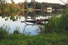 Albero morto caduto nell'acqua con la riflessione del cielo e immagini stock