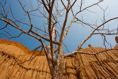 Albero morto con il fondo della roccia Fotografia Stock