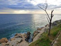 Albero morto dalla riva di mare, Rovigno, Croazia fotografie stock libere da diritti