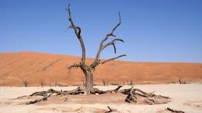 Albero morto di Vlei nel deserto di Namib Fotografia Stock