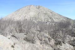 Albero morto dopo l'eruzione Fotografie Stock Libere da Diritti