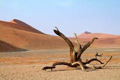 Albero morto nel deserto Fotografia Stock