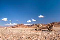Albero morto nel deserto di pietra, Marocco Immagine Stock