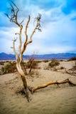 Albero morto nel parco nazionale di Death Valley fotografie stock