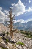 Albero morto nelle montagne immagine stock