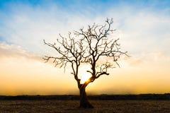 Albero morto solo durante il tramonto fotografia stock