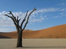 Albero morto Sossusvlei, Namibia Fotografia Stock Libera da Diritti