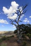 Albero morto sull'orlo del San Rafael Swell Immagine Stock