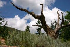Albero morto in un giardino della montagna Immagini Stock Libere da Diritti